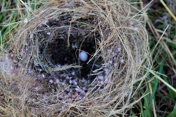 Vogelnester füllen